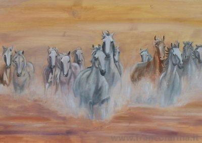 Cavalli nella camargue